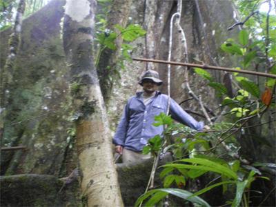 Marche dans la Selva